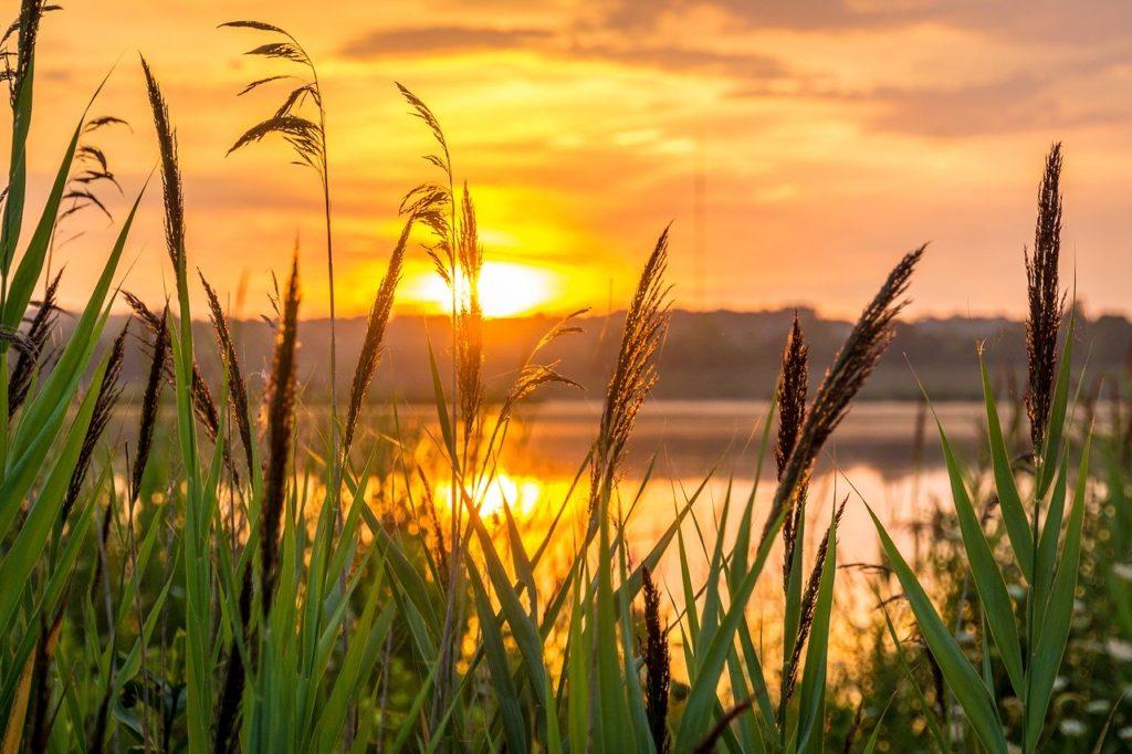 Stimmungsvoller Sonnenuntergang in Orangetönen von einer Wiese aus über einen See hinweg fotografiert.