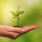 Junge Pflanze auf Handfläche